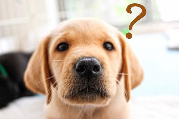 洗面台リフォーム:よくある質問